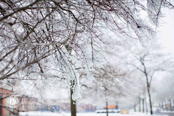 挂在树梢上的雪,在下雪天的温哥华非常常见.